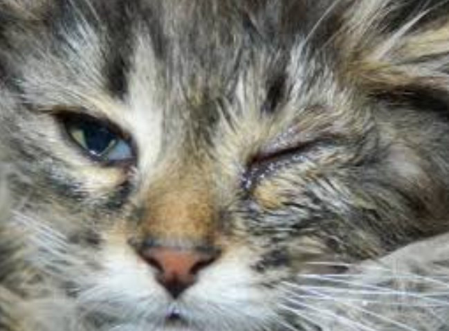 У котенка гноится глазик