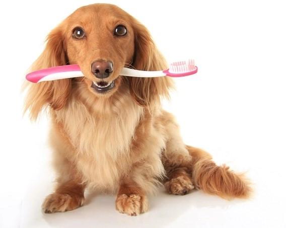 что делать если у собаки неприятно пахнет изо рта
