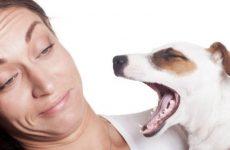 Запах изо рта у собаки — что делать